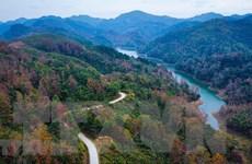 Việt Nam phấn đấu trồng hơn một tỷ cây xanh ứng phó biến đổi khí hậu