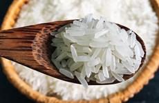 Cần có động thái mạnh mẽ để bảo vệ thương hiệu gạo thơm ST25