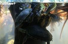 Khám phá ngôi nhà chung của nhiều loài rùa quý hiếm tại Cúc Phương