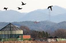 Hàn Quốc có thêm trường hợp nhiễm cúm gia cầm ở chó