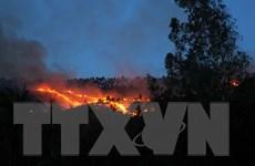 [Photo] Cháy rừng lớn tại Bình Định do... dân đốt vàng mã