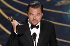 Vinh quang trong đêm trao giải Oscar thuộc về Leonardo DiCaprio