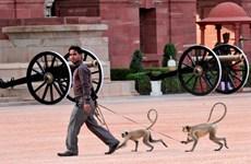 Tổ chức từ thiện muốn đưa chó, khỉ hoang ở New Delhi đi làm... đặc sản