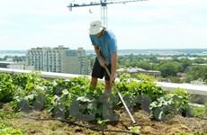 Nông nghiệp hóa các cao ốc giữa lòng thủ đô Washington D.C