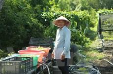 Bài 5: Chân dung người nông dân Mỹ gốc Việt bên bờ sông Mississippi