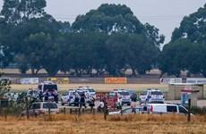 Australia rúng động vì vụ cha giết con trên sân cricket