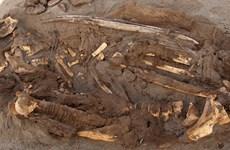 Peru: Tìm thấy 150 xác ướp thuộc nền văn minh lạ ở sa mạc