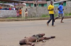 Chùm ảnh đại dịch khủng khiếp Ebola đang đe dọa cả thế giới