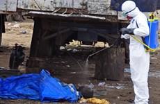Guinea tuyên bố tình trạng khẩn cấp, 1.069 người đã chết vì Ebola
