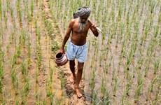 Báo Nga: Nhiều nông dân Ấn Độ tự sát vì hạt giống biến đổi gene
