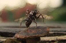 """""""Người Kiến - Ant Man"""": Siêu anh hùng kỳ lạ nhất của Marvel"""