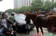 Lái xe BMW nhận bài học đích đáng vì định vượt ngựa trên đường