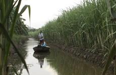 Biến đổi khí hậu: Đồng bằng sông Cửu Long sẽ phải đắp đê biển?