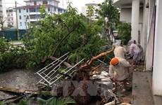 Video mưa lớn gây lũ lụt kinh hoàng tại tỉnh Quảng Bình