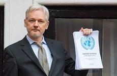 WikiLeaks: Trẻ 14 tuổi cũng có thể đánh cắp dữ liệu Đảng Dân Chủ