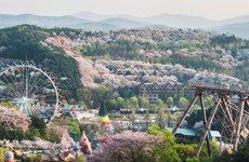 Công viên Everland thu hút du khách Việt khi tới Hàn Quốc