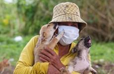 [Mega Story] Người đàn bà nghèo cưu mang bầy chó hoang giữa mùa dịch