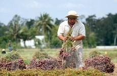 Bộ Công Thương: Phải có giải pháp tiêu thụ hết nông sản cho nông dân