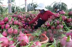 Chưa phát hiện có thương lái nước ngoài vào thu mua gom nông sản