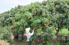 Ngành nông nghiệp: Vẫn thiếu một quy hoạch mang tầm vóc sản xuất lớn