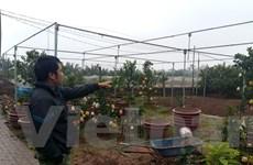 Hà Nội: Nông dân Lĩnh Nam đổi đời nhờ trồng quả ngon, giống cây mới