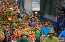 Kiểm soát chất lượng ở khâu cấp chỉ dẫn địa lý để nâng cao xuất khẩu