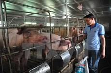 Thủ tướng yêu cầu có giải pháp căn cơ để ổn định ngành chăn nuôi