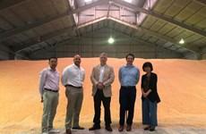 Lô hàng 67.000 tấn ngô đầu tiên trực tiếp từ Hoa Kỳ đến Việt Nam