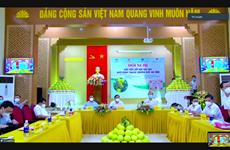 Lần đầu tiên bưởi Phúc Trạch lên gian hàng Việt trực tuyến quốc gia