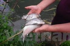 """Bài 2: Ai đã """"đầu độc"""" tôm cá ở đầu nguồn dòng suối chảy vào sông Đà?"""