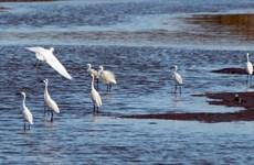 Vườn Quốc gia Xuân Thủy nhận bằng khen của Thủ tướng