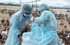 Tây Ninh: 1 triệu liều vắcxin để phòng chống cúm gia cầm
