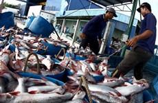 Truyền hình Australia đánh giá tích cực về thủy sản Việt