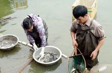 Hà Nội: Thông tin thủy sản nhiễm kim loại là không chính xác