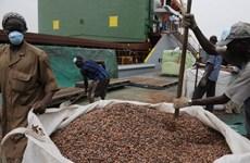 Sản lượng bột cacao tại khu vực Bắc Mỹ tăng nhẹ