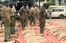 Săn bắn động vật hoang dã là hành vi tiếp tay cho tham nhũng