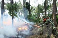 Nguy cơ cháy rừng rất cao ở huyện miền núi Phú Yên
