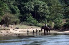 [Photo] Bản Đôn - vùng đất huyền thoại của voi rừng