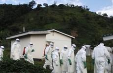 Châu Âu và châu Á đối phó với nguy cơ virus Ebola lây lan
