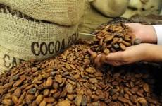 Thị trường cacao khởi sắc bất chấp đà giảm của giá đường và càphê