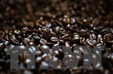 Giá càphê tăng trong khi đường và cacao tiếp tục đà giảm