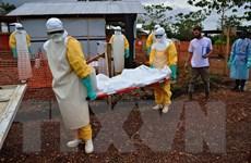 Thêm nhiều trường hợp nhiễm Ebola ở Guinea và Sierra Leone