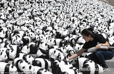 [Photo] 1.600 chú gấu trúc đáng yêu du lịch đến Hàn Quốc