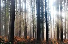 Phát hiện bất ngờ: Mật độ cây xanh trên Trái Đất gấp 8 lần dự kiến