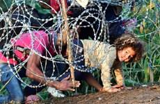 """Hàng rào thép gai - """"nước cờ vô vọng"""" với khủng hoảng nhập cư"""