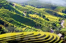 Đặc sắc Tuần Văn hóa du lịch ruộng bậc thang Hoàng Su Phì