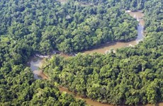 EU cung cấp 550 triệu USD giúp Brazil chống nạn phá rừng Amazon