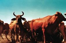 Trung Quốc-Australia hoàn tất thương vụ thịt bò trị giá 250 triệu USD