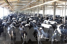TH True Milk thu hút sự quan tâm với dự án chế biến sữa tại Nga
