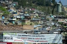 """Colombia ban bố tình trạng báo động đối phó virus """"đầu nhỏ"""""""